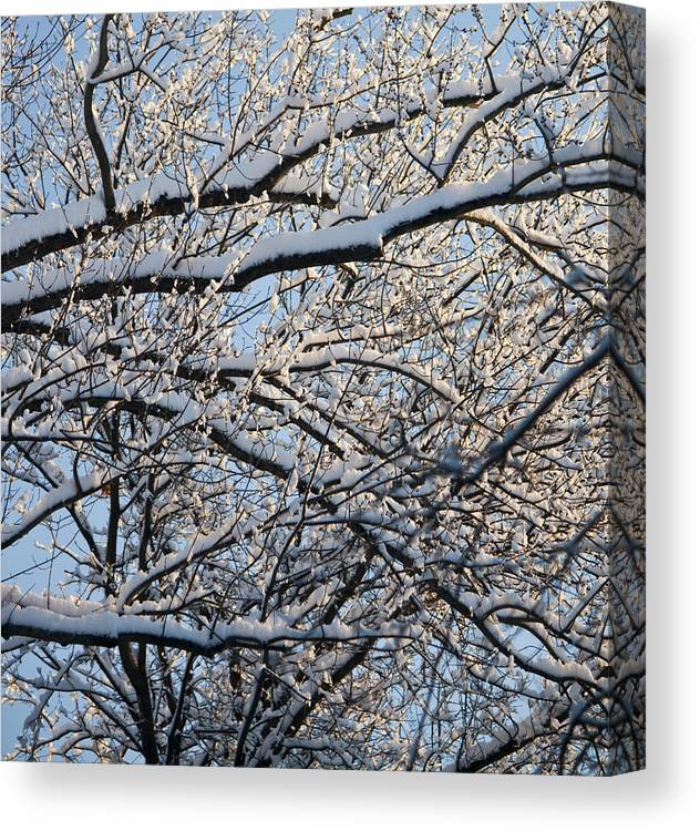 Snow Canvas Print featuring the photograph Snow Covered Branches 2 by Teresa Mucha