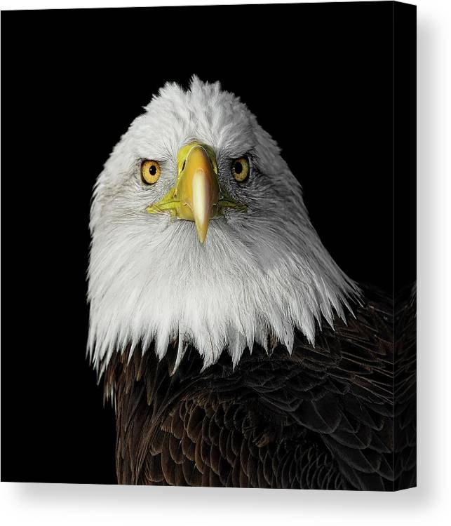 Animal Themes Canvas Print featuring the photograph Bald Eagle by Dansphotoart On Flickr