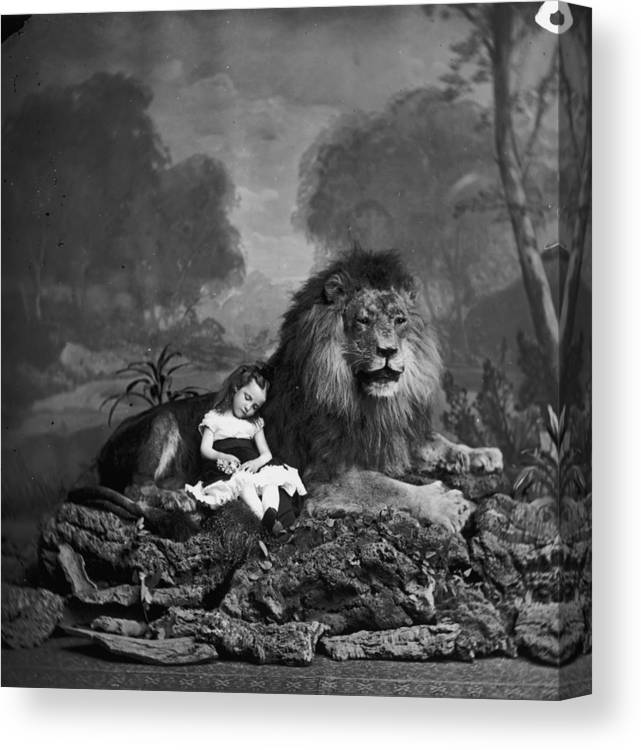 Stuffed Canvas Print featuring the photograph Beauty And The Beast by London Stereoscopic Company