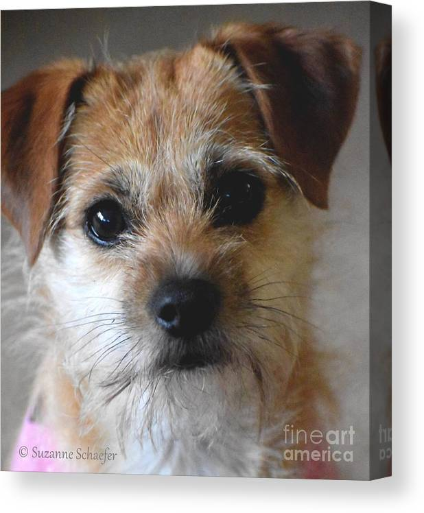 Dog Art Canvas Print featuring the photograph Puppy Love by Suzanne Schaefer