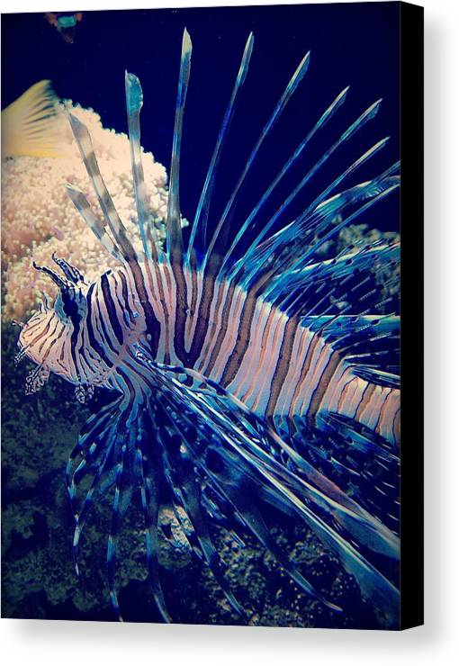 Fish Canvas Print featuring the photograph Fishy by Aaron Swenson