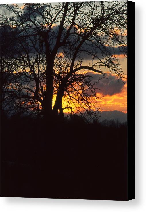 Tree Canvas Print featuring the photograph Malevolent Sunset by Brian Lucia