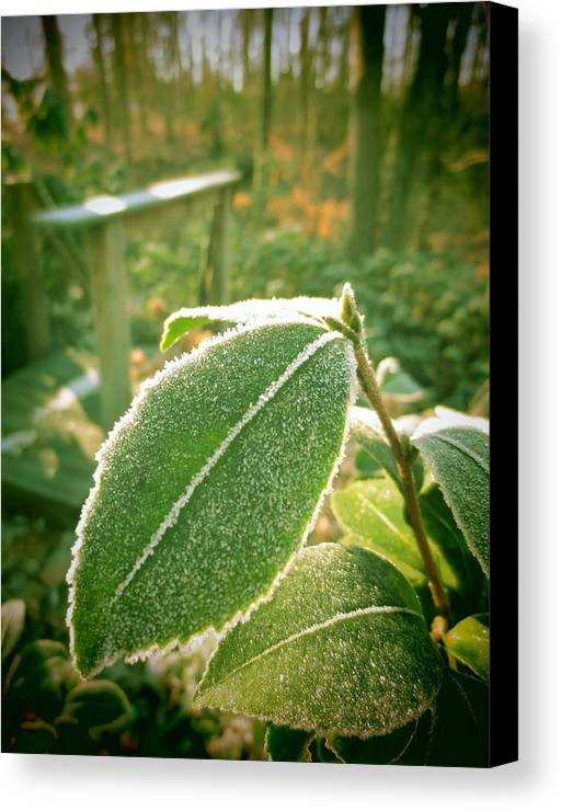 Leaf Canvas Print featuring the photograph Sunlit Freeze by Penny Parrish