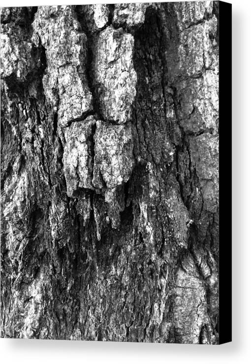 Tree Canvas Print featuring the photograph Tree Rot by Aaron Swenson
