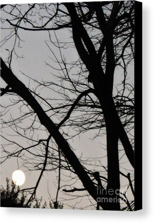 Moon Canvas Print featuring the photograph Moonlight Serenade by Snapshot Studio