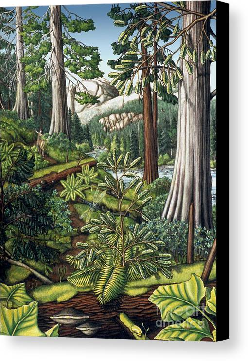 Landscape Canvas Print featuring the painting Stoltman Old Growth Forest Landscape Painting by Kim Hunter