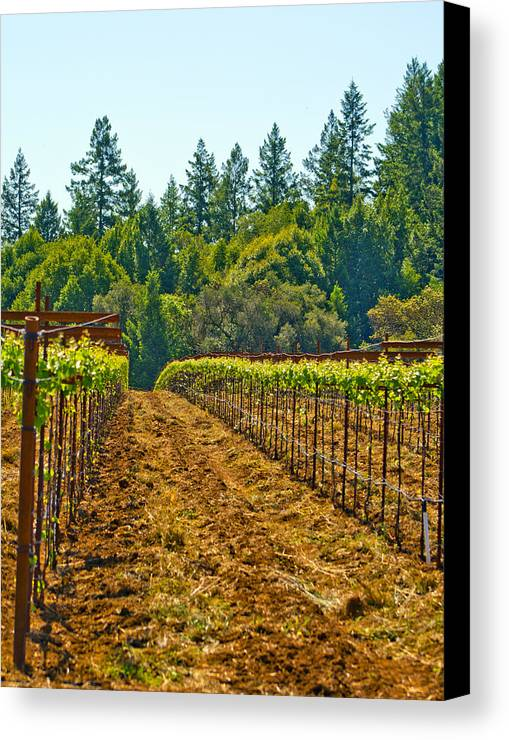 Wine Canvas Print featuring the photograph Winery by Elizabeth Alamillo