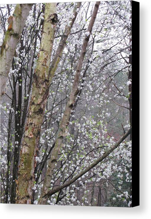 Trees Canvas Print featuring the photograph A Winter Day by Donna Thomas