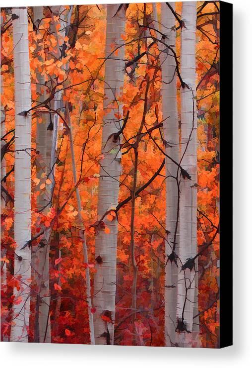 Aspens Canvas Print featuring the photograph Autumn Splendor by Don Schwartz