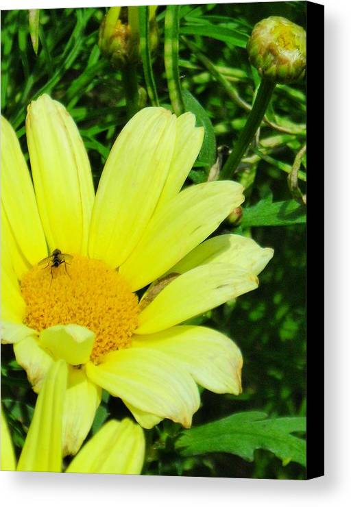 Flower Canvas Print featuring the photograph Beautiful by Peter Mowry