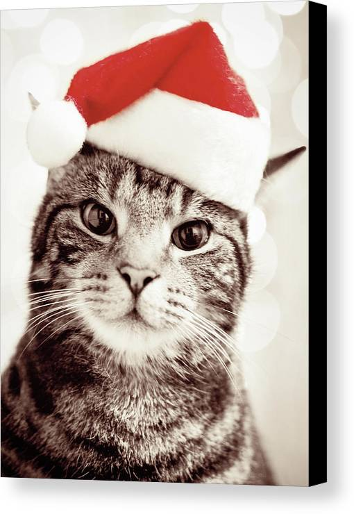 Vertical Canvas Print featuring the photograph Cat Wearing Christmas Hat by Michelle McMahon