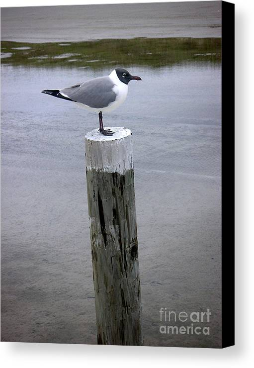 Nature Canvas Print featuring the photograph Creatures Of The Gulf - Keeping Watch by Lucyna A M Green
