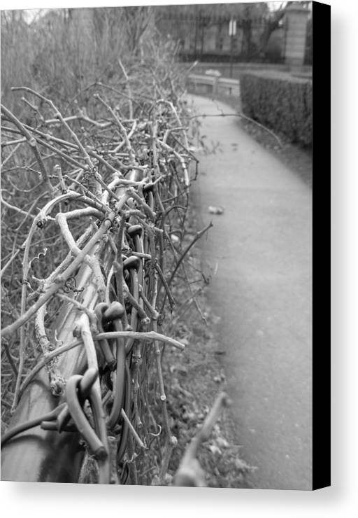 Black And White Canvas Print featuring the photograph Down To The Wire by Amanda Vouglas
