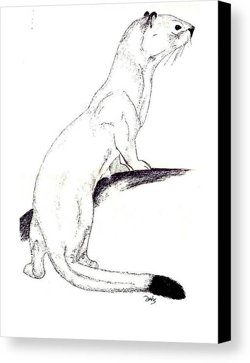 Weasel Canvas Print featuring the painting Ermine by Debra Sandstrom