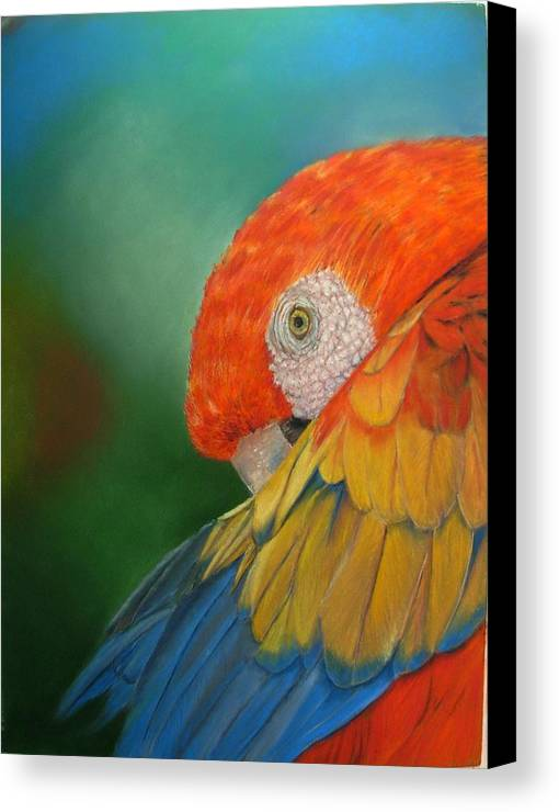 Bird Canvas Print featuring the painting Escondida by Ceci Watson