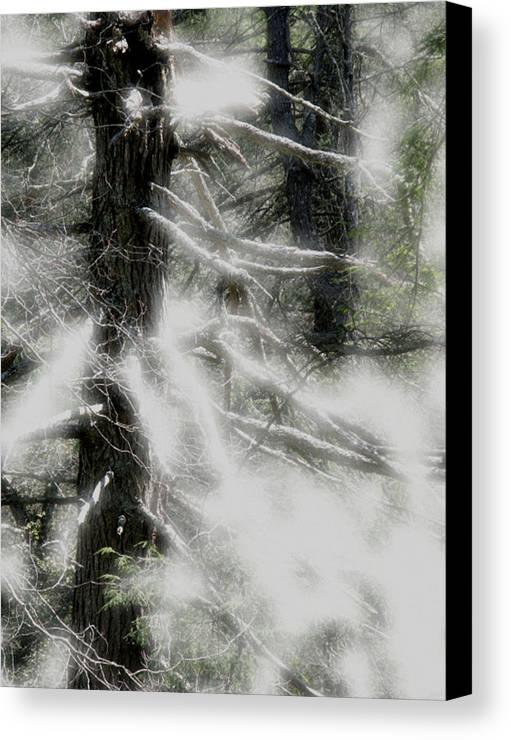 Trees Canvas Print featuring the digital art Georgia Pines by Donna Thomas