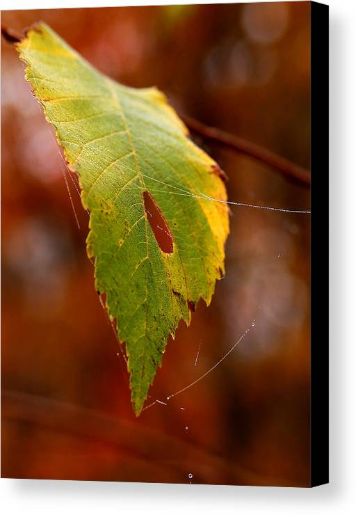 Leaves Canvas Print featuring the photograph Green Silk by Linda McRae