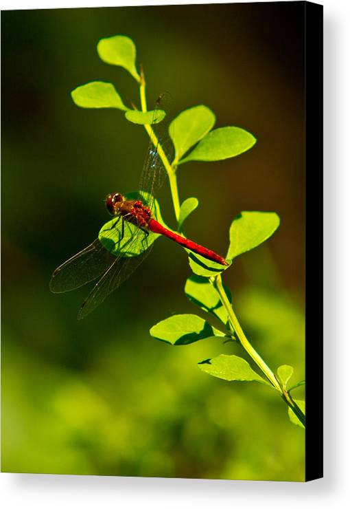 Insects Canvas Print featuring the photograph Landing Pad by Frank Pietlock