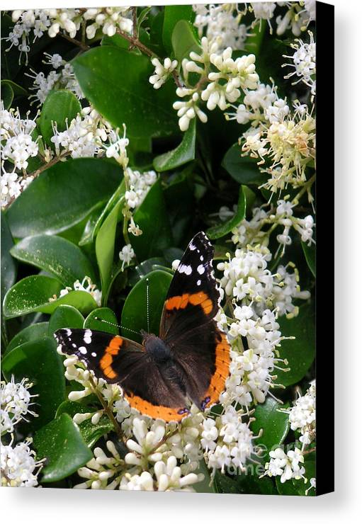 Nature Canvas Print featuring the photograph Nature In The Wild - A Sweet Stop by Lucyna A M Green