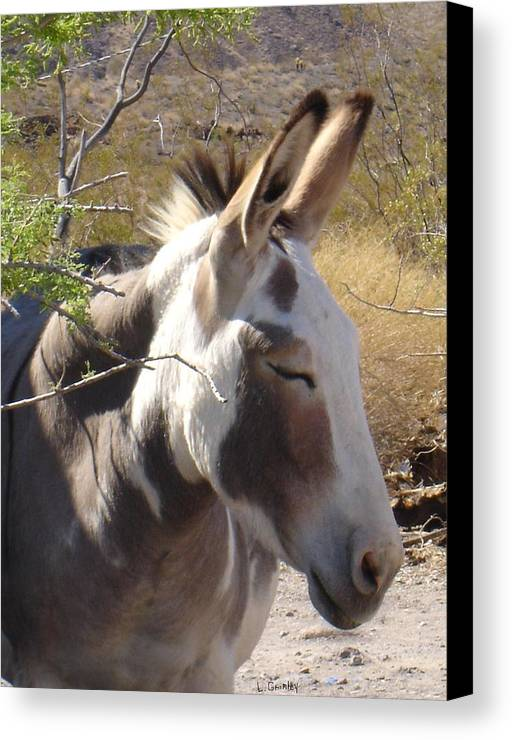 Photography Canvas Print featuring the photograph Oatman Burro by Lessandra Grimley