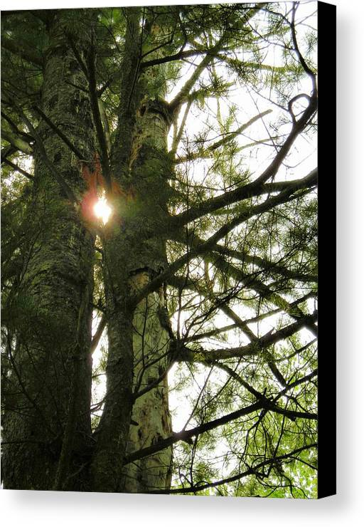 Trees Canvas Print featuring the photograph Peek A Boo by Peter Mowry