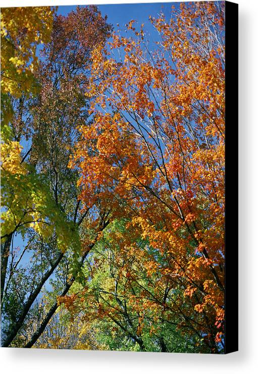 Trees Canvas Print featuring the photograph Study For Autumn 2 by Steve Parrott