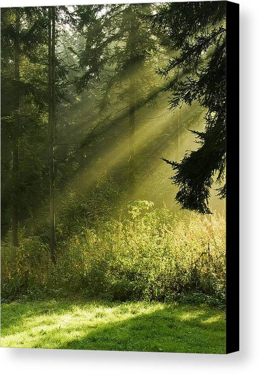 Nature Canvas Print featuring the photograph Sunlight by Daniel Csoka