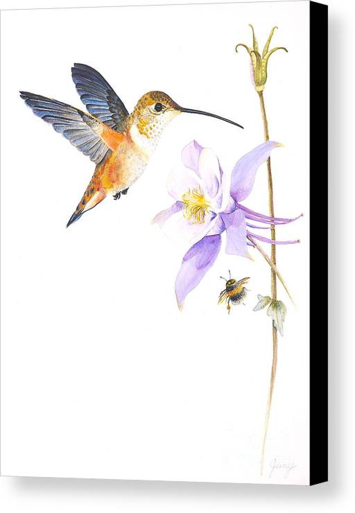 Hummingbird Canvas Print featuring the painting The Nectar Hunt by Jany Schindler