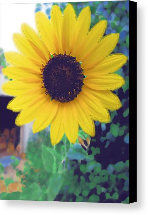 Sun Flower Canvas Print featuring the photograph The Sunflower by Chuck Shafer