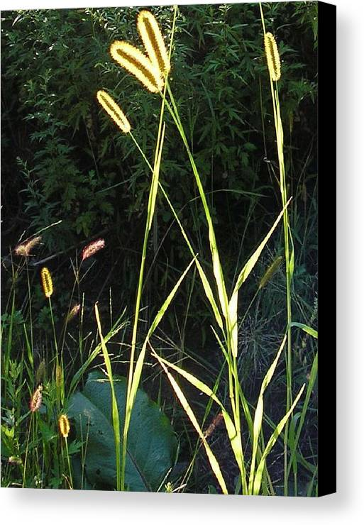 Grass Canvas Print featuring the photograph With Love From Zena by Christina Gardner