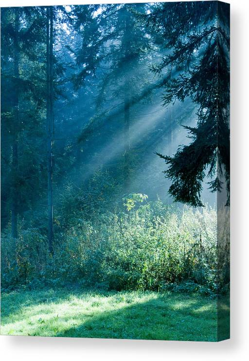 Nature Canvas Print featuring the photograph Elven Forest by Daniel Csoka