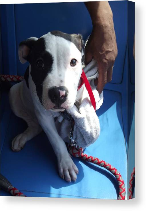 Puppy Canvas Print featuring the photograph Nervous Passenger by Lori-Anne Fay