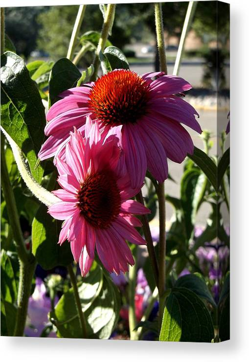 Flowers Canvas Print featuring the photograph Pink 2 by Cj Carroll