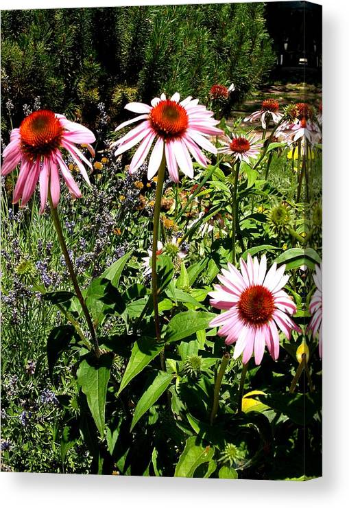 Flowers Canvas Print featuring the photograph Pink Garden by Cj Carroll