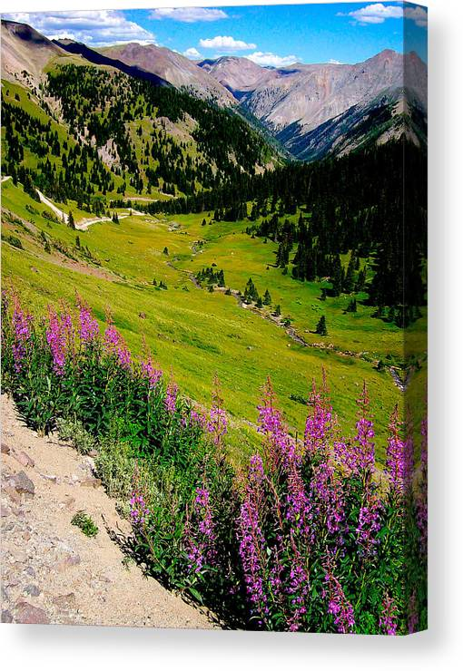 Fireweed Canvas Print featuring the photograph Fireweed In Henson Creek Drainage by FeVa Fotos