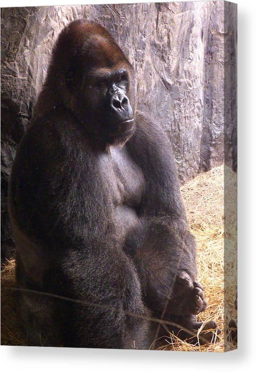 Gorilla Canvas Print featuring the photograph Busch Gorilla by Wayne Skeen