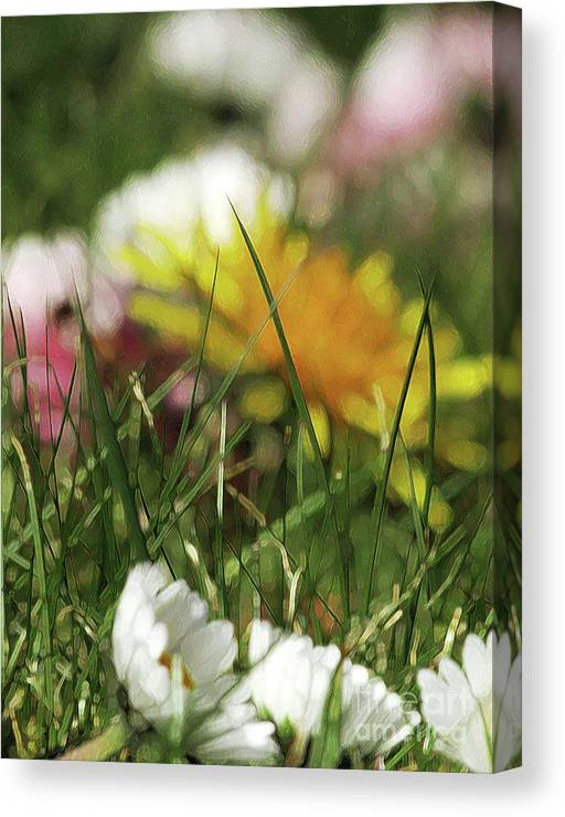Grass Canvas Print featuring the photograph Dreamy Spring by Kim Tran