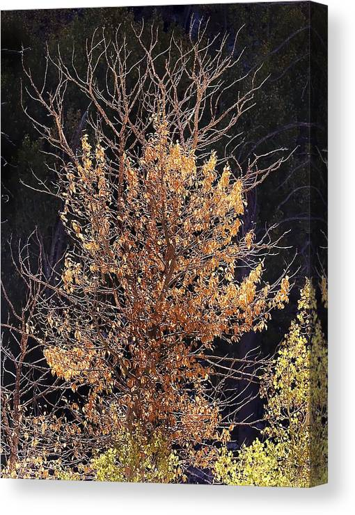 California Scenes Canvas Print featuring the photograph Final Fall by Norman Andrus