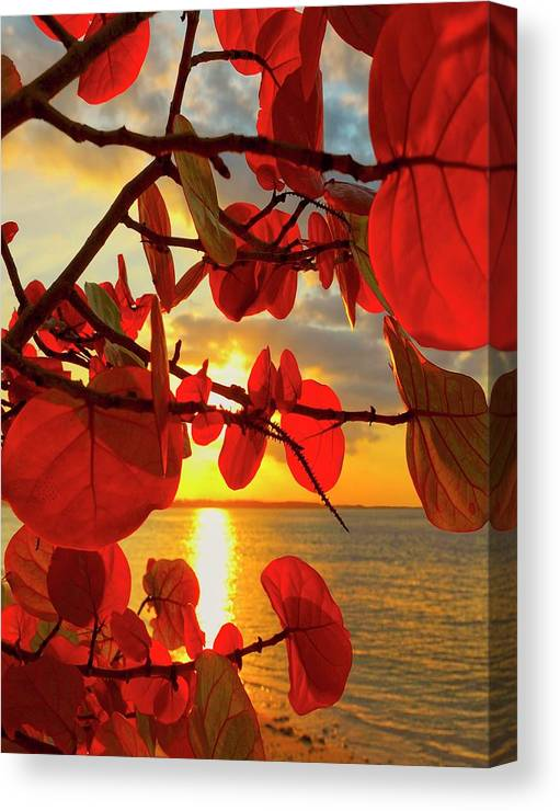 Beach Canvas Print featuring the photograph Glowing Red by Stephen Anderson