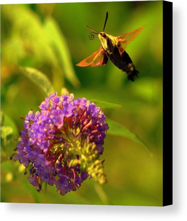 Lake View Canvas Print featuring the digital art Georgian Moth by Aron Chervin