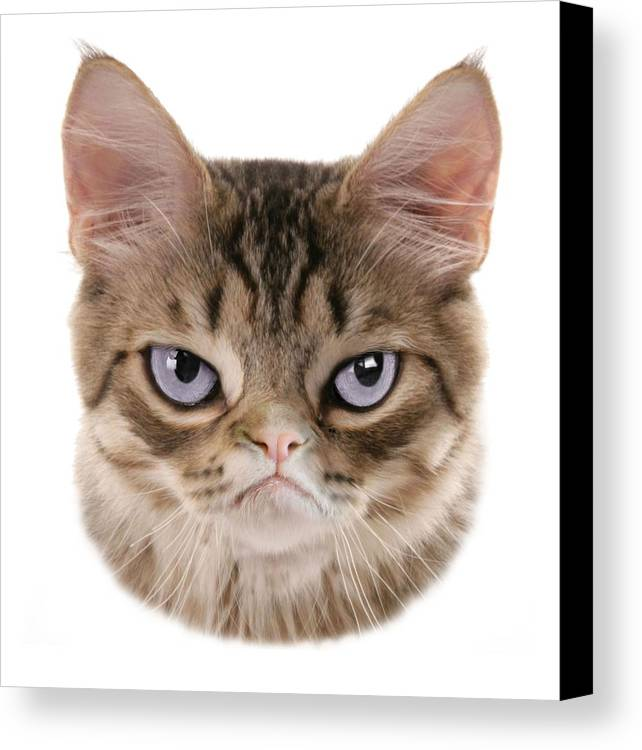 Grumpy Kitten Canvas Print featuring the digital art Kitten T-shirt by Dan Lennard