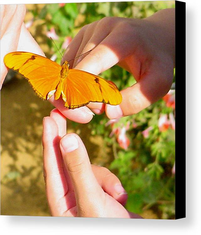 Butterfly Canvas Print featuring the photograph Land On Me by PJ Cloud