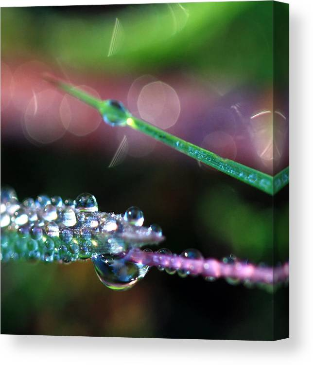 Dewdrops Canvas Print featuring the photograph Carnival Of Color by Carolyn Fletcher