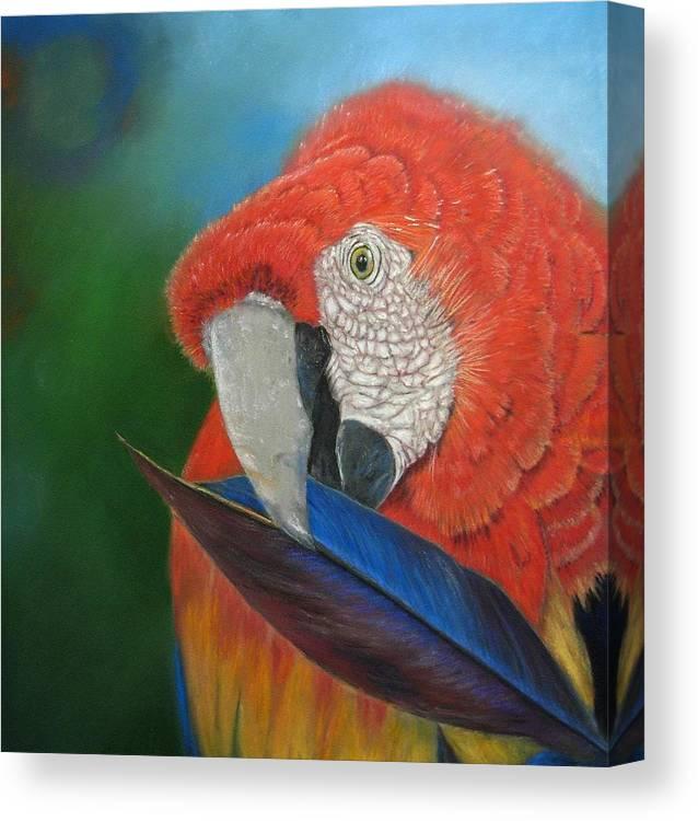 Bird Canvas Print featuring the painting Presumida by Ceci Watson