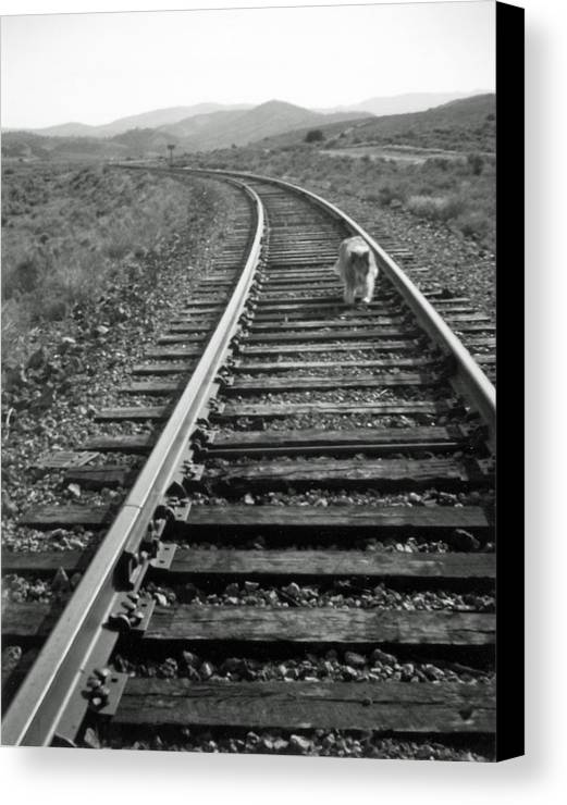 Landscape Canvas Print featuring the photograph Long Road Home by Allan McConnell