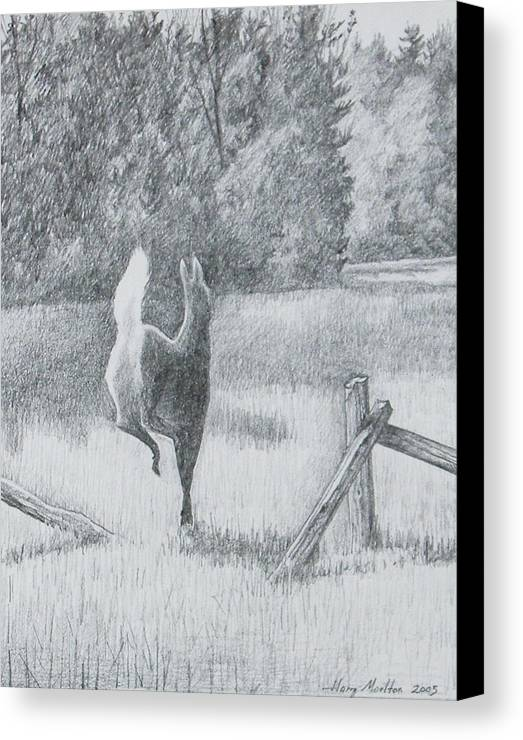 Deer Canvas Print featuring the drawing Off She Goes by Harry Moulton