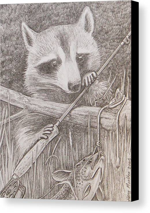 Raccoon Canvas Print featuring the drawing Raccoon by Harry Moulton