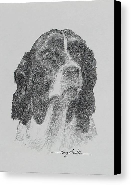 Dogs Canvas Print featuring the drawing Springer by Harry Moulton