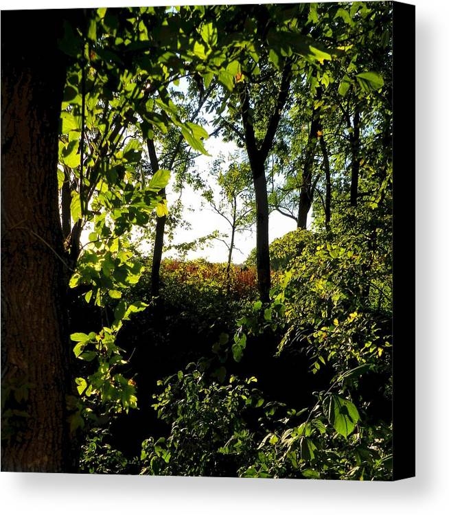 Rural Scene Canvas Print featuring the photograph Across The Way by Julie Dant