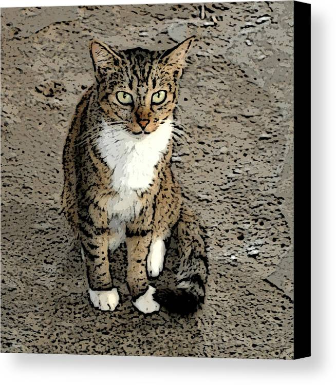 Animals Canvas Print featuring the photograph Curious Gaze by Janis Palma